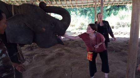 Lali alimentando elefante en reserva de recuperación de elefantes