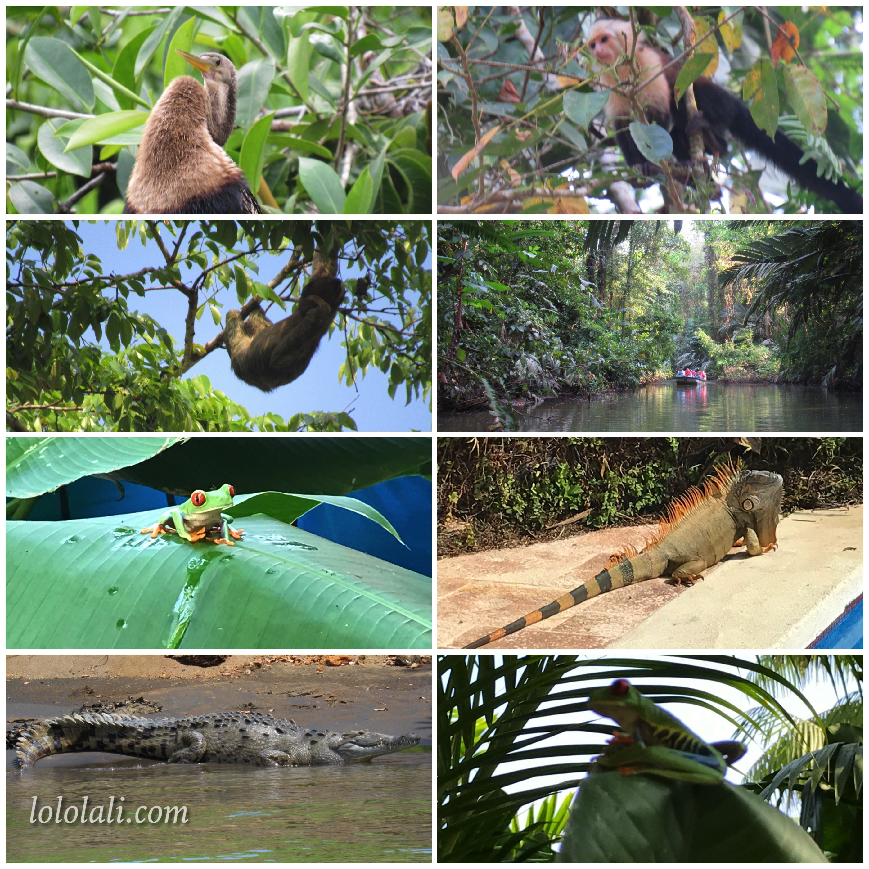 Tortuguero National Park, animals