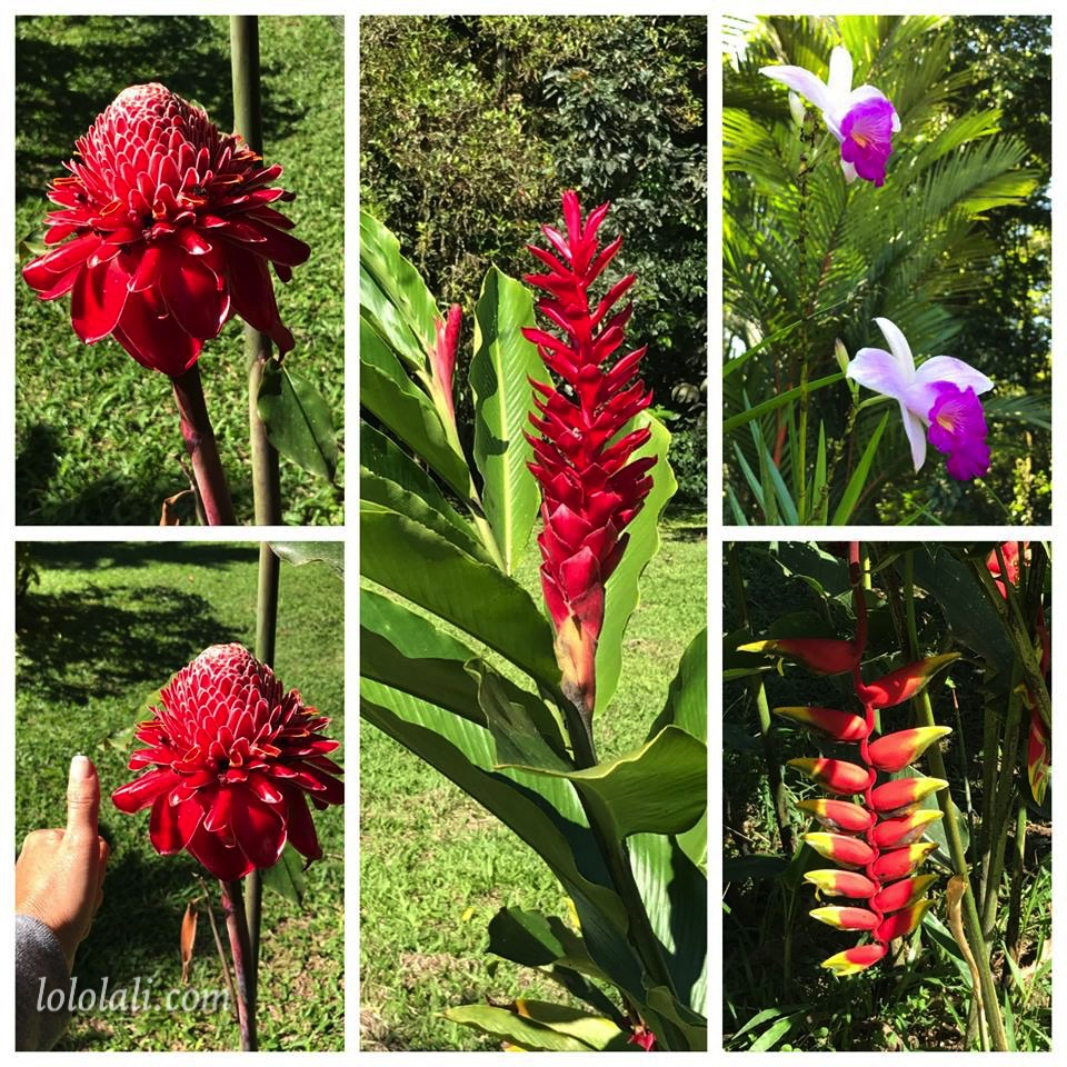 Plants in Costa Rica