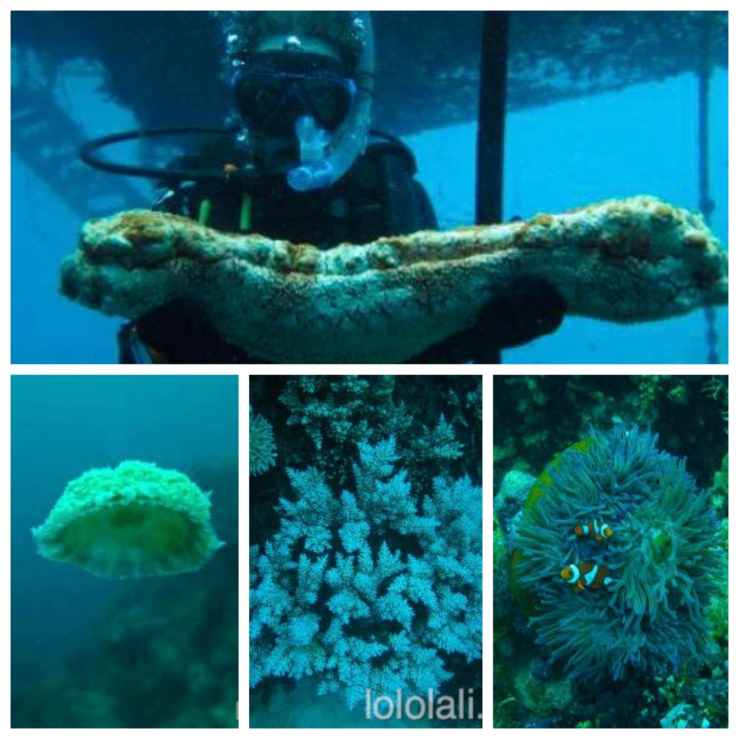 Lali buceando en la Gran Barrera de Coral, Australia, Oceanía
