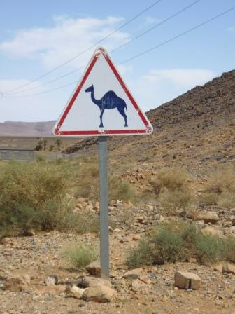 Warning sign with dromedaries in full route in the Sahara desert - It is part of my collection of road signals