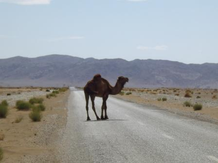I went with the car along the Sahara Desert route and I crossed a dromedary, I got off to approach the caravan of dromedaries that was near there