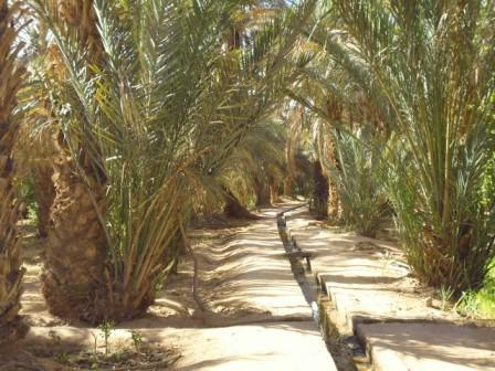Gardens of Merzouga. The channel that is made to carry the water by the different plots is observed. As reported by the Berbers, where there are dunes installed is because there is water, so they make wells to extract water and in this case to distribute it in the gardens