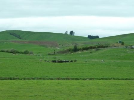 Recorrido desde Auckland hasta Waitomo