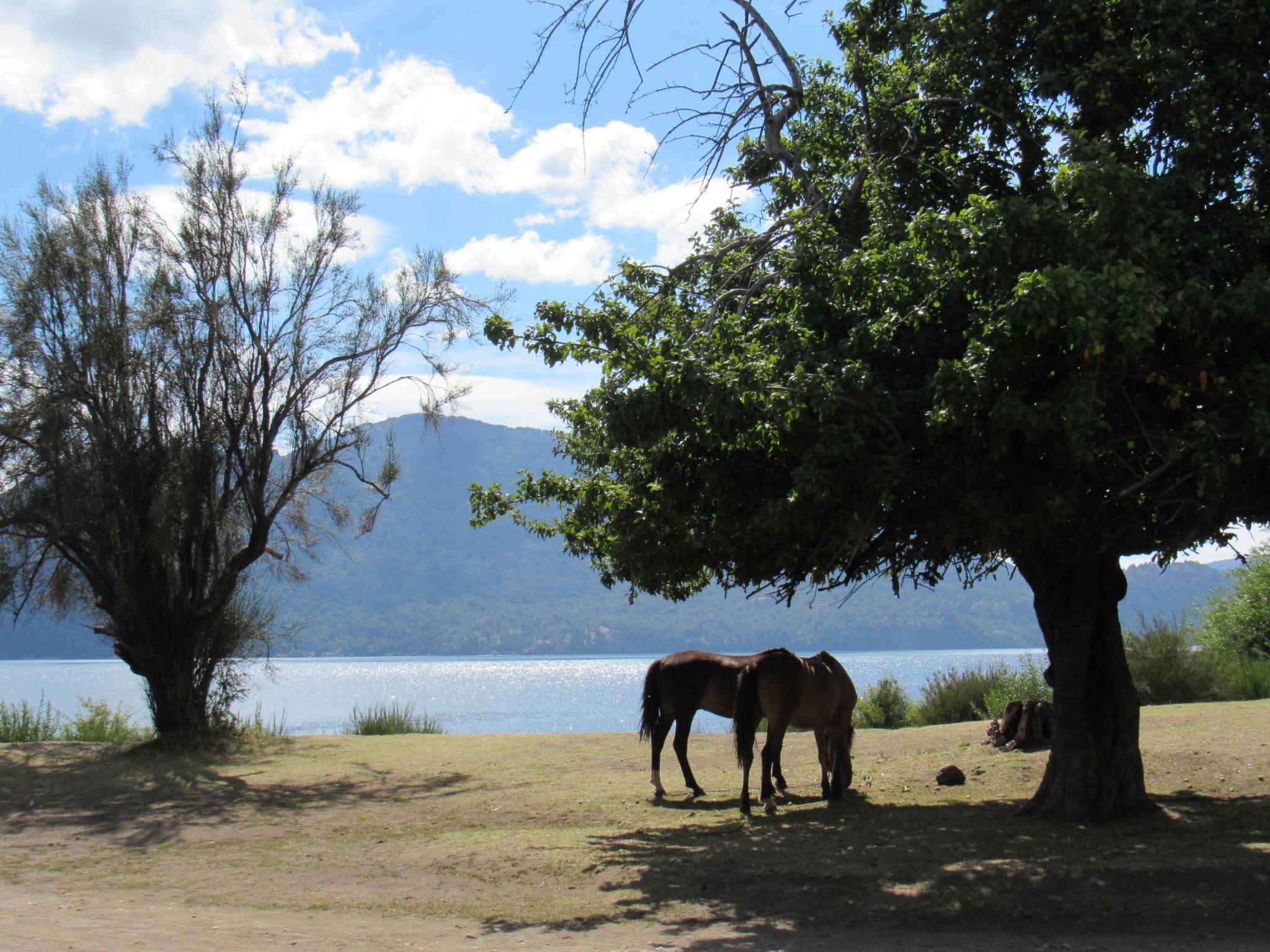 Parque Nacional Lanín – Neuquén, Argentina