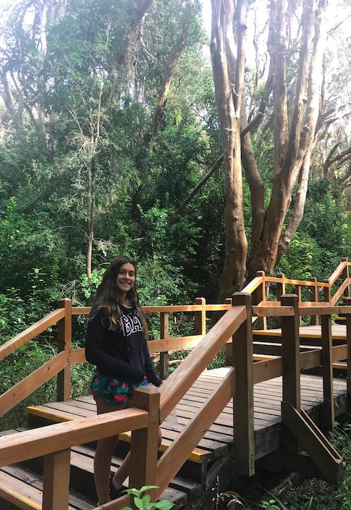 Pasarelas del Parque Nacional Los Arrayanes