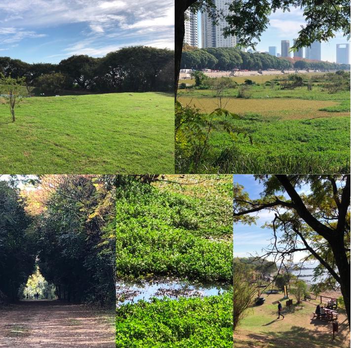 Biodiversidad de flora y fauna de la Reserva Ecológica Costanera Sur
